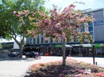 Blooming Trees! - Napier