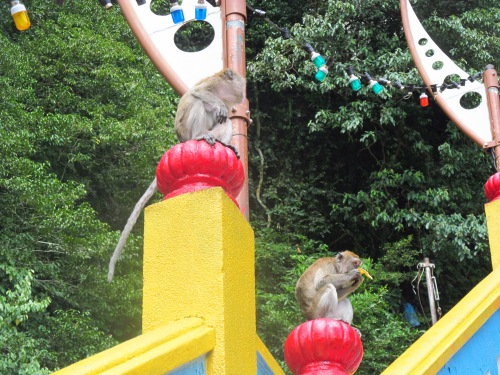 Malicious Macaque Monkeys