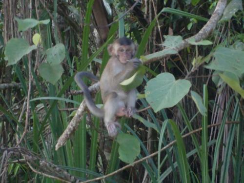 Cheeky monkey.