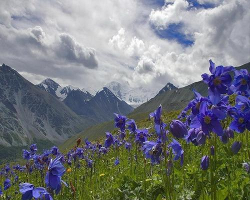 Not sure where this is, but the flowers and mountains combo gets me every time.