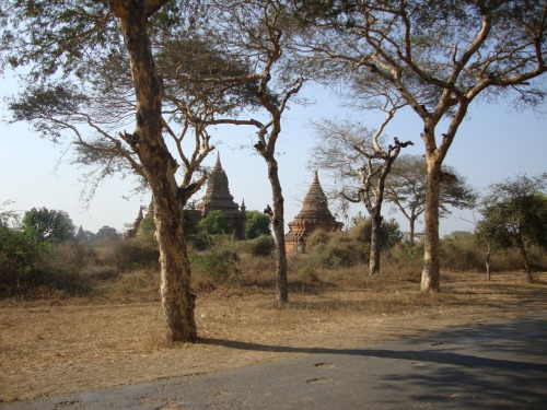 Roadside temples and rad trees