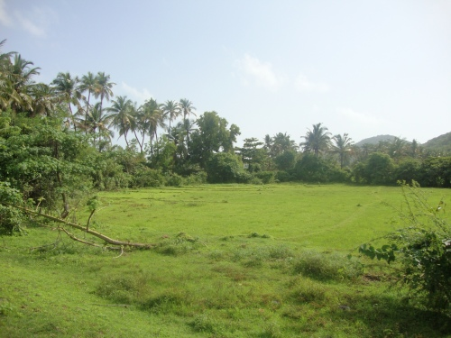 Monsoon in Goa: green as green can be.