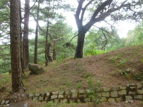 Beginning of the Pine Forest