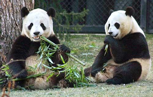 Total yuppie pricks, these pandas.