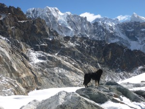 Himalayan Spirit Guide