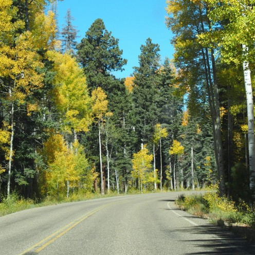 Road Trip - North Grand Canyon
