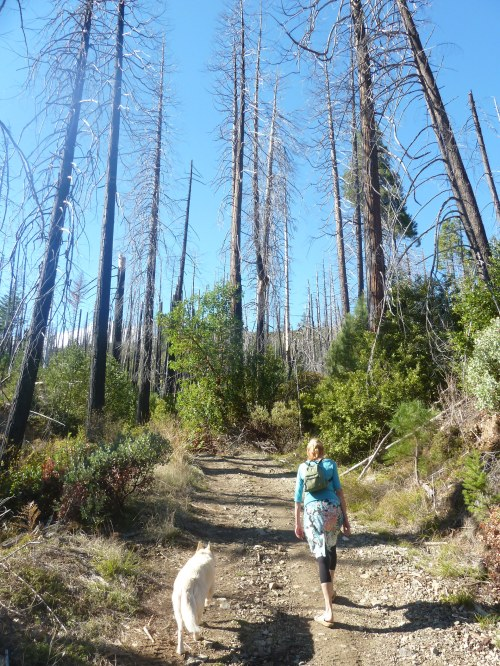 Hiking the kalmiopsis with Mom and Storm
