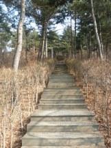 The many steps of Namsan